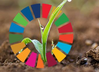 Using SDGs to support a country-focused results approach